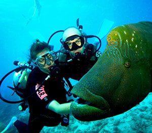 learn-scuba-diving